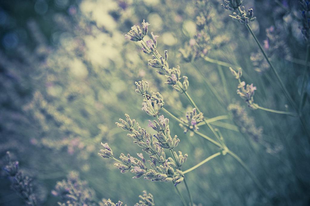herbstkind-015.jpg